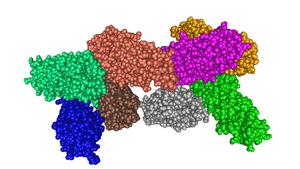 Panton–Valentine leukocidin - Image: Panton Valentine Leucocidin S Component From Staphylococcus Aureus MMDB ID 29003 PDB ID 1T5R