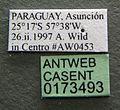 Paratrechina longicornis casent0173493 label 1.jpg