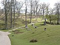 Parkland, Knole Park, Sevenoaks - geograph.org.uk - 1191083.jpg