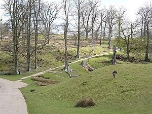 Knole Park