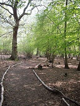 Parndon Wood - geograph.org.uk - 400614