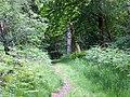 Path, Godshill Inclosure - geograph.org.uk - 1334059.jpg