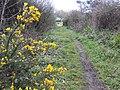 Path from Lizard Downs - geograph.org.uk - 411459.jpg