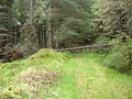 Path through Shin Forest - geograph.org.uk - 447578.jpg