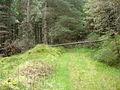 Path through Shin Forest - geograph.org.uk - 447578.jpg