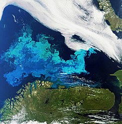 Phytoplankton bloom captured by Envisat.jpg