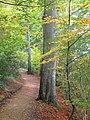 Pine Walk - Shaftesbury - geograph.org.uk - 2133173.jpg