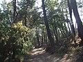 Pineta del Diavolino - panoramio.jpg