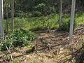Piršenbreg Pheasant 01.jpg