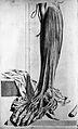 """Plate from """"Anatomia Humani Corporis"""", Bidloo, 1685 Wellcome L0006367.jpg"""