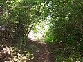 Poets Path holloway from Ryton to Redmarley - geograph.org.uk - 28151.jpg