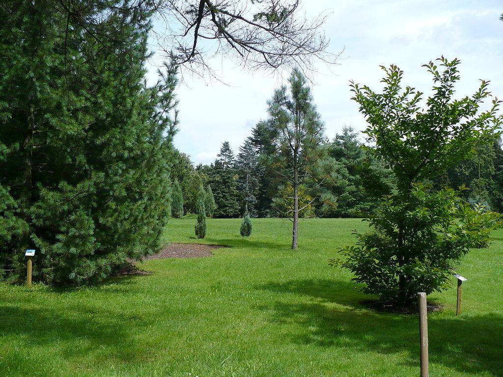 1024px-Poland_-_Wirty_Arboretum.jpg