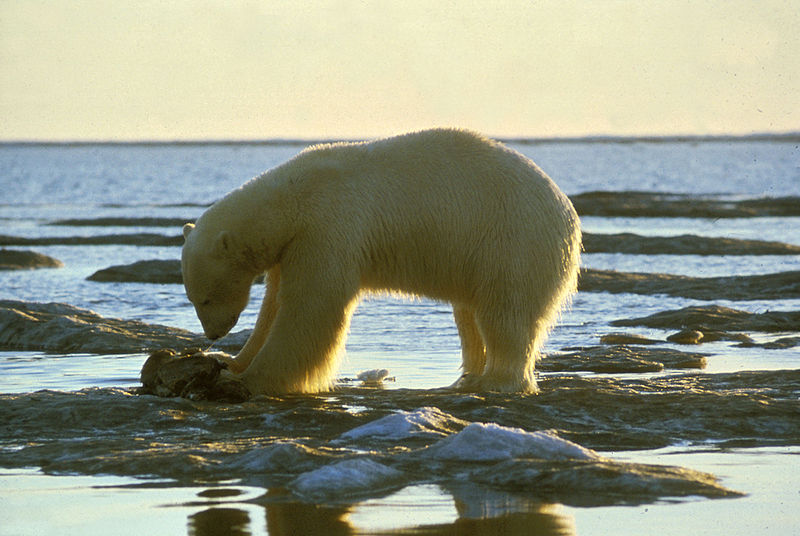 Los 10 animales con más peligro de extinción