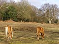 Ponies grazing at the edge of Ashurst Wood, New Forest - geograph.org.uk - 148285.jpg