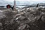 Port Lockroy, Antarctica (24940382615).jpg