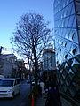 Prada Boutique Aoyama and Street.jpg