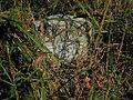 Prairie Road Cemetery Tutwiler MS 009.jpg