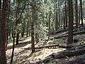Prescott Natl Forest Nima6.JPG
