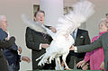President Ronald Reagan receives the 40th White House Thanksgiving Turkey 1987.jpg