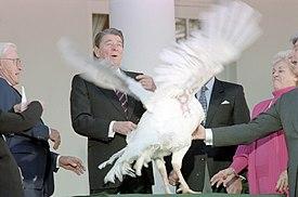 National Thanksgiving Turkey Presentation Wikipedia