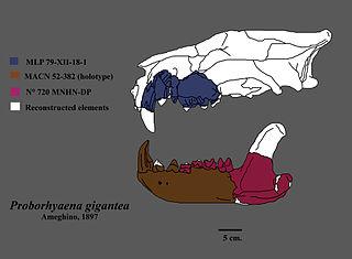 Proborhyaenidae family of mammals