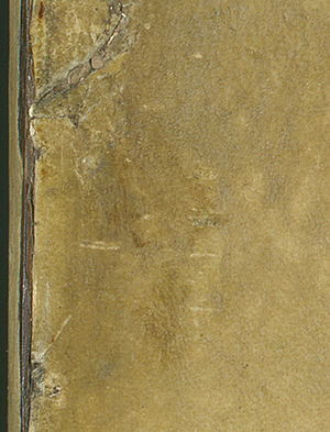 La Bella Principessa -  Detail of the upper left corner, revealing a fingerprint which has been suggested as being similar to one of Leonardo's.