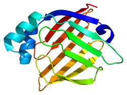 Protein FABP3 PDB 1g5w.png