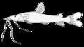 Pseudoplatystoma fasciatum.png
