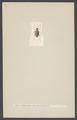Ptinus - Print - Iconographia Zoologica - Special Collections University of Amsterdam - UBAINV0274 001 08 0015.tif