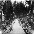 Puget Sound Navy Yard showing path through forest, approximately 1897 (WASTATE 2841).jpeg