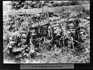 Headhunting - Punan's heads taken by Sea Dayaks