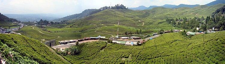 Puncak Bogor Wikipedia Bahasa Indonesia Ensiklopedia Bebas