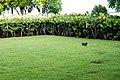 Punta Cana, Dominican Republic - panoramio (27).jpg
