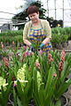 RIAN archive 377475 Flowers of Siberia greenhouse complex prepares its production for the March 8 holiday.jpg