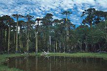Самую большую зону занимают какие леса