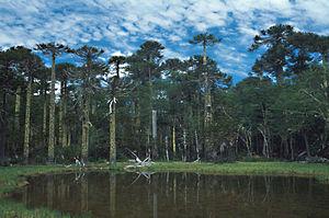 Huerquehue National Park - Lagoon Los Patos