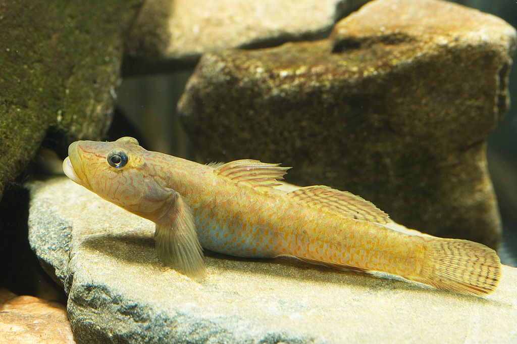 7 Different Types of Fish That Make Great Pets 3