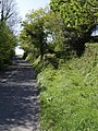 Road to Lifton - geograph.org.uk - 429368.jpg