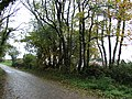 Road with trees east of Soldon - geograph.org.uk - 602285.jpg
