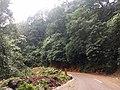 Roadside Landslip Anaimalali Hills IMG 20180822 164556905.jpg