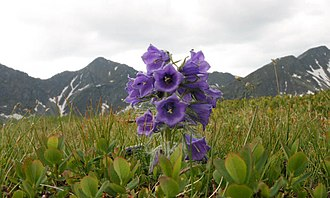 Western Tatras - Plačlivé