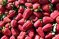 Rosales - Fragaria × ananassa - 1.jpg