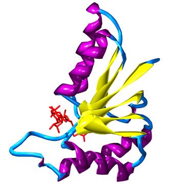 Nicotinamide adenine dinucleotide - Image: Rossman fold