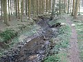 Rotenbach in Bachmulde im Matzengehrer Wald.jpg