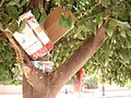 Rubbish nested in a tree (2845736814).jpg