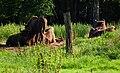 Ruhende Wisentgruppe Wildpark Alte Fasanerie Klein-Auheim.JPG