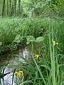 Ruisseau Roule-Crottes.JPG