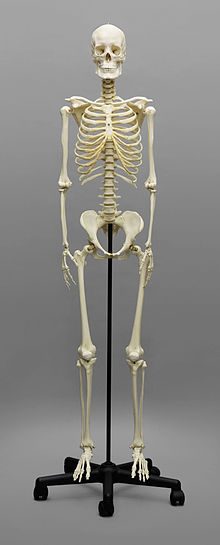Bone how to avoid