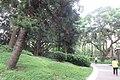 SZ 深圳 Shenzhen 蛇口 Shekou Nanshan 四海公園 Sihai Park plants and trees Sept 2017 IX1 03.jpg