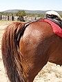 Saddle-crupper.jpg